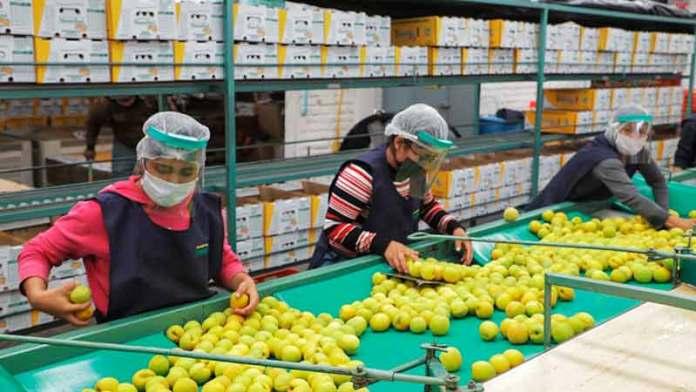 Sector agropecuario afirma ser crucial en recuperación económica de México