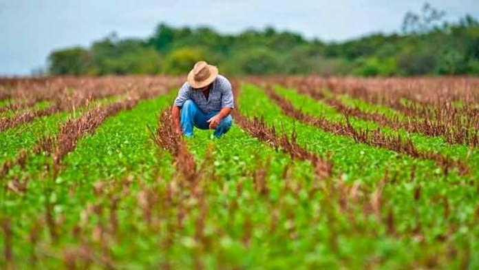 Agiliza Sader vinculación de productores de sorgo con el mercado chino