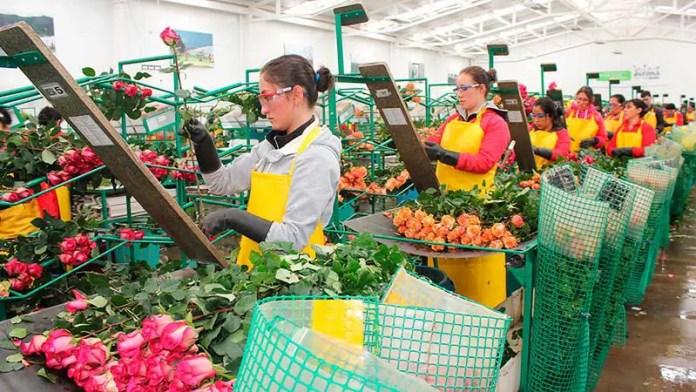 Envíos de arreglos florales para San Valentín deben estar libres de plagas y enfermedades
