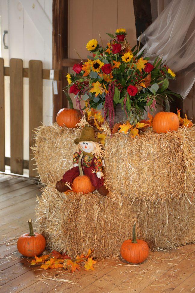 halloween type decorations