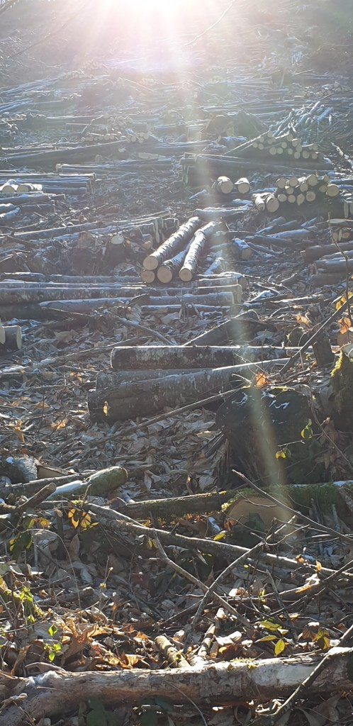 2021 Bac pro forêt meymac visite exploitation châtaigniers