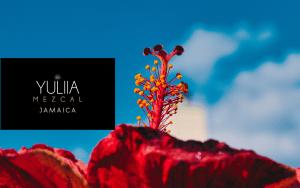 YULIIA-licor-base-mezcal-espadin-sabor-jamaica-brand-001
