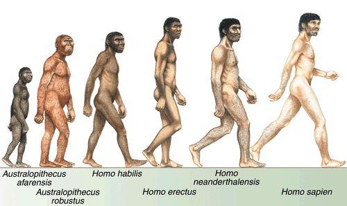 Human species.jpg