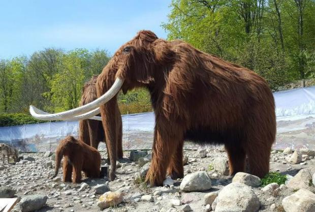 Woolly Mammoths.jpg