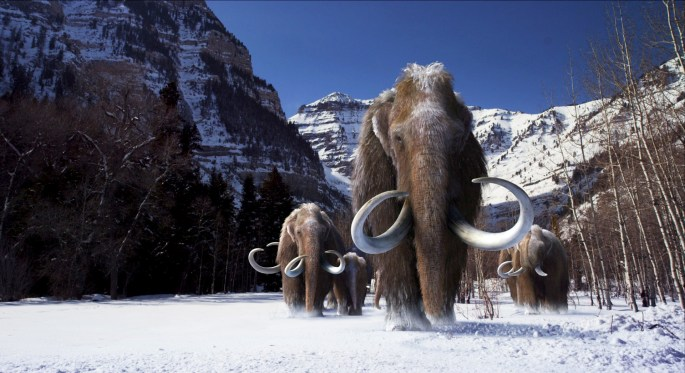 woolly mammoths 2.jpg
