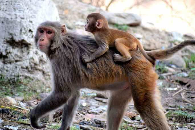 photo of monkeys