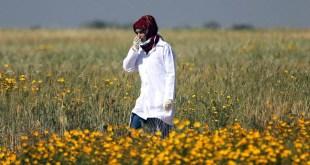 Razan Nayyar, La chica del pañuelo rojo