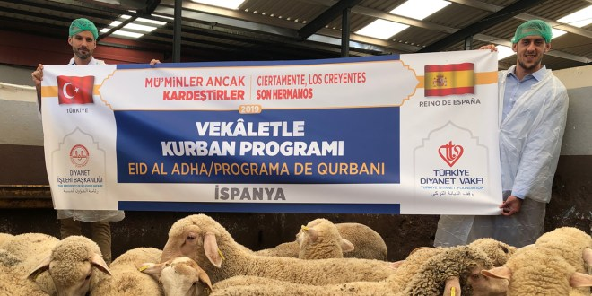 Distribución de corderos del Eid al Adha a más 80 familias de Sevilla