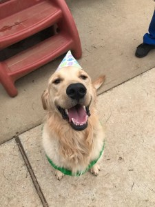 Dog with birthday hat on