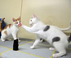 Unglaublicher Katzen-Aberglaube weltweit - MF Tierblog