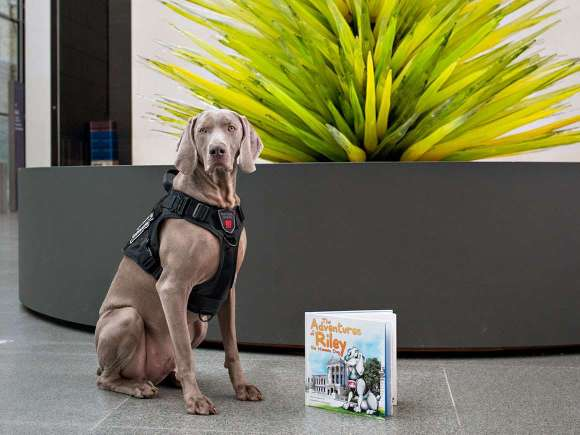 Riley the Museum Dog poses with picture book in front of Lime Green Icicle Tower
