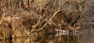 hounds-in-the-river-photo-credit-Steve-Long