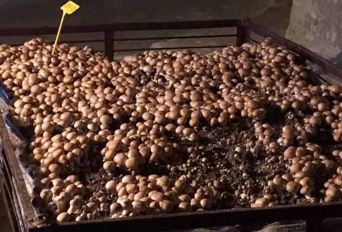 Visite champignonniere MFR CHATEAUBRIANT