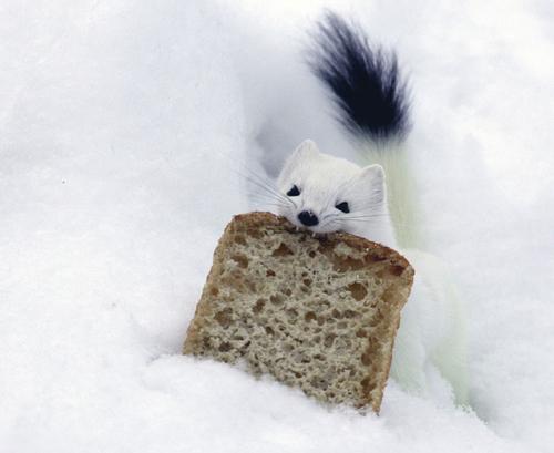 pilla la tostada y corre