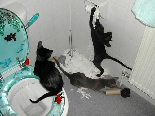 la alegria de tener gatos...