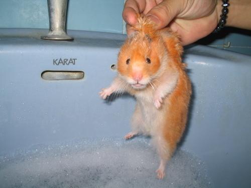 agente 00 roedor...