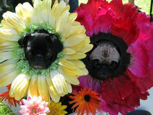 alergico a las flores y a los perros? pues corre