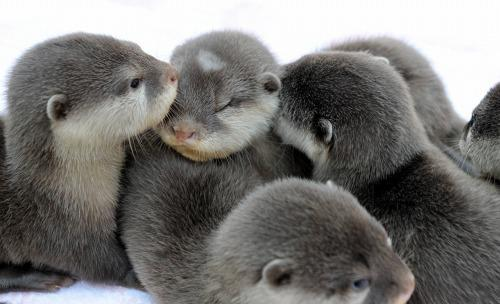 Baby Otters OMG