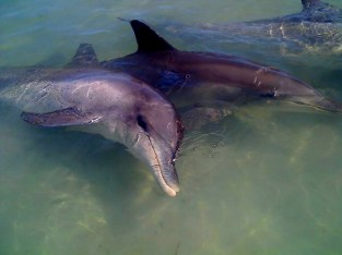 meeting wild dolphins at money mia