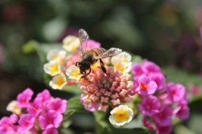 bee getting some in malta