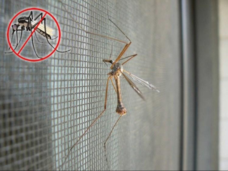Комарам ходу нет. Выбираем прочную москитную сетку