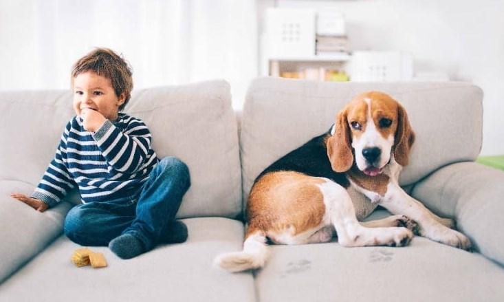 Если диван предназначен для таких активных членов семьи, стоит выбрать наиболее прочную ткань, насколько это возможно