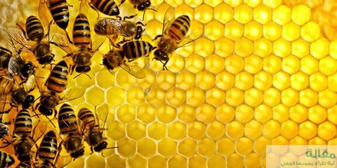 ما هي استخدامات العسل الطبية ؟
