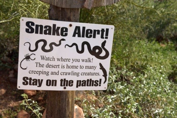 Snake Alert! Watch where you walk! The desert is home to many creeping and crawling creatures. Stay on the paths!