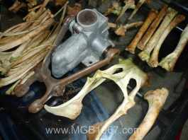 MGB and white tail deer suspension