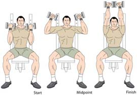 Seated_Arnold_Press