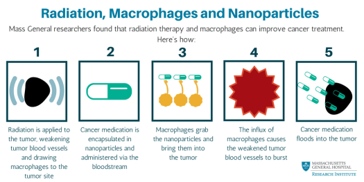 Radiation & Macrophages