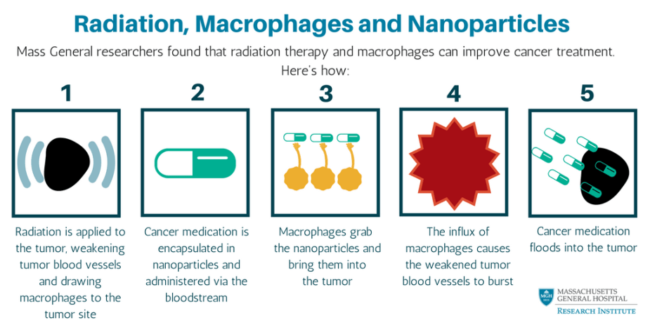 Radiation & Macrophages