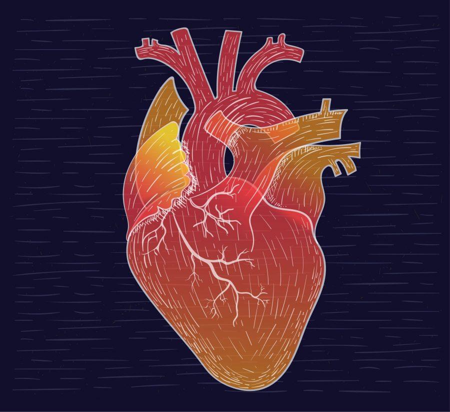 heart-illustration