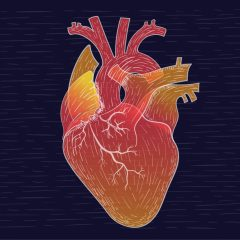 heart-illustration