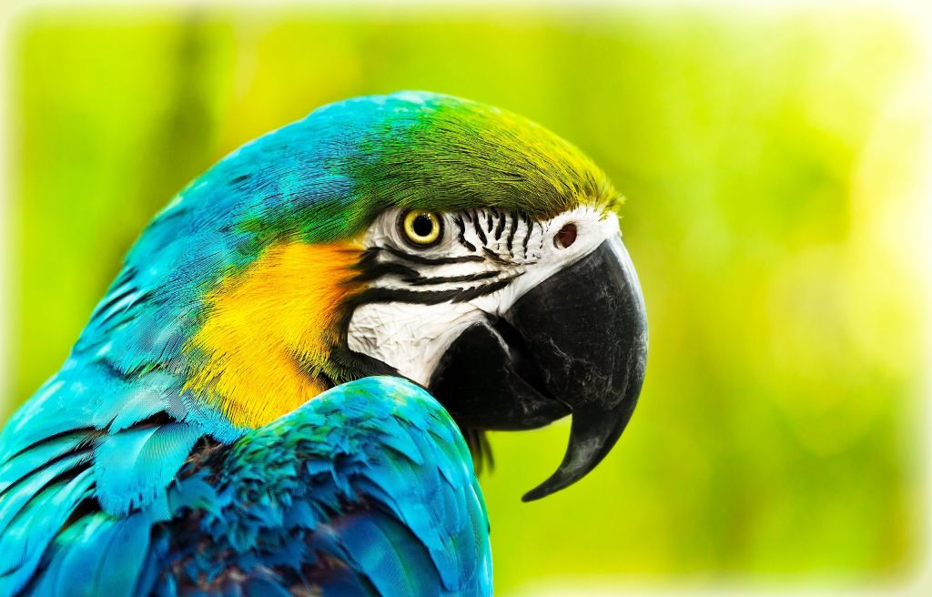 Image of a colorful parrot