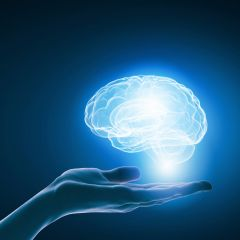 42253354 - close up of businessman holding digital image of brain in palm