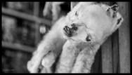 Baby llama for the house - La Paz
