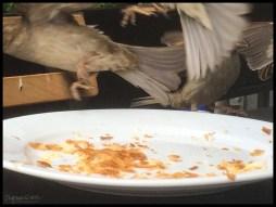 When Birds A-Snack