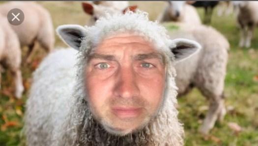 Danny Koriath Sheep