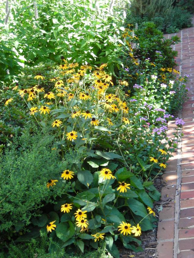 Border detail with Rudbeckia and Dianthus, photographed in August. Photo: Christa Watters