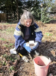 A Master Gardener digging soil samples in February.