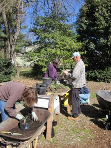Paul Lund leads a team of Master Gardeners and interns in a propagation work party in March