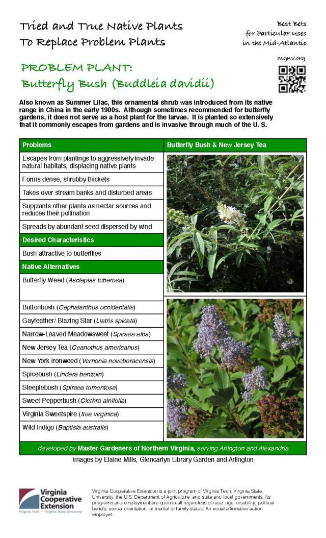MGNVorg Butterfly Bush
