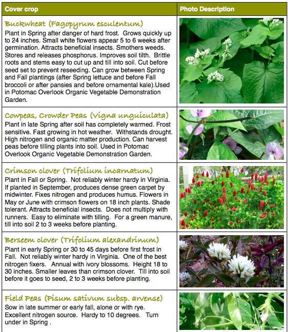 Best Bets To Use for Cover Crops | Master Gardeners of