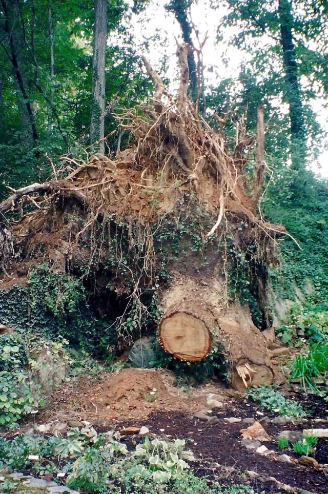 Good-bye chestnut oak. Hello sunshine.