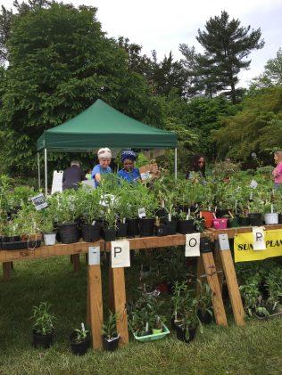 Master Gardener helping at Plant Sale
