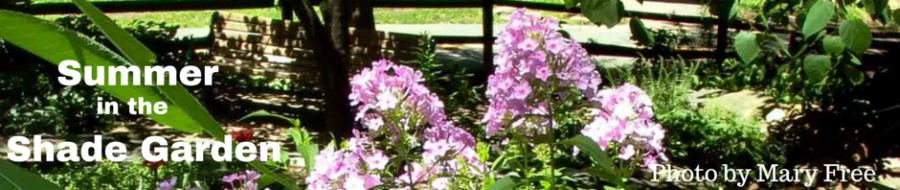 Summer in the Shade Garden