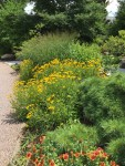 A colorful flowing bed in summer, intermixes native trees, shrubs, grasses, and perennials