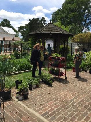 Garden coordinator Wendy Mills recommends herbs grown in the library garden