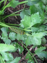 Caterpillar on a leaf.